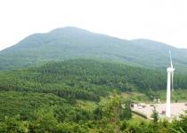 바람 매운 황무지에 '방풍 울타리'… 푸른 숲이 열리다