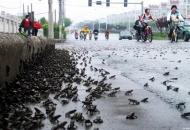 두꺼비 지진 예측, 사실로 드러나