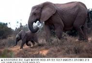 왜 아프리카코끼리는 천덕꾸러기 신세가 됐을까