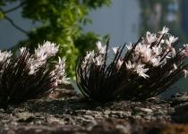 멸종위기 희귀란 석곡 복원