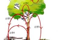 나무, 알고보니 생태계의 '미네르바'?