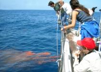 고래는 바다의 농부, 영양 듬뿍 배설물이 '거름'