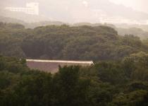 죽은 왕들이 노니는 600년 참나무 숲
