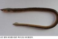 신종·미기록종 자생생물 601개 발굴