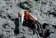 서남해안 갯벌, 유네스코 자연유산 등재 추진