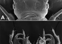 딱정벌레 애벌레, 두꺼비 잡아먹어  '먹이의 반란'