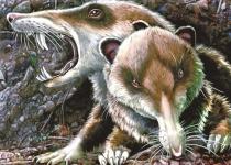 '아이스 에이지' 검치 다람쥐 스크랫의 화석이 발견됐다?