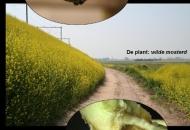 식물과 곤충은 화학전 한다