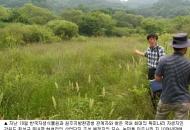 멸종위기 2급 독미나리 최대 자생지 발견