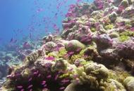 부시의 마지막 선물...사상 최대 규모 해양보호구역 태평양에 설정