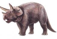 가장 온전한 공룡 화석 시화호서 발견