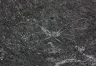 1억년 전 '거미 화석' 국내 첫 발견