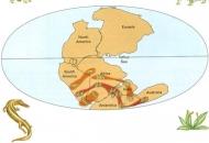 한반도는 2억6천만년 전 남반구서 왔다