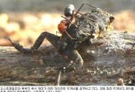 호주 조폭 독두꺼비도 개미에겐 '즐거운 식사'