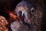 청소 새우가 먹히지 않는 비결 있다