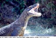 길이 3m 무게 100㎏ 도마뱀은 독사